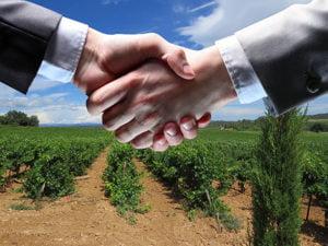 blue side, négociateur, médiateur, négociation, médiation, vente, vignoble, Provence, Languedoc, domaine viticole